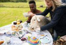sheep-eating-tea/Airbnb