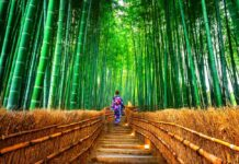 bamboo-forest-jepang
